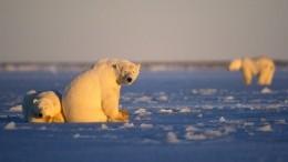 Украина намерена осваивать Арктику