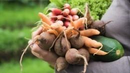 Фермеры просят запретить ввоз импортных овощей ифруктов вРоссию
