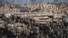 Ущерб отвырубки тайги вгосзаказнике «Туколонь» составил почти 750 миллионов рублей— Следком
