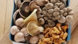 Какие грибы нужно покупать, чтобы неотравиться— советы Роспотребнадзора