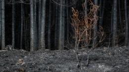 Пожары вВосточной Сибири добрались дозаповедников идетских лагерей