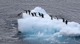 Российские парусники пойдут в«кругосветку» вчесть 200-летия открытия Антарктиды
