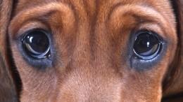 Видео: Школьники под Астраханью четыре дня спасали застрявшего втрубе щенка