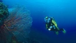 Видео: Два дайвера пропали при погружении вБаренцевом море