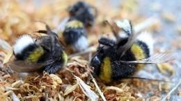 Все погибнет? Пасечник рассказал омире без пчел