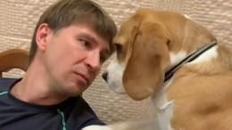 «Понять ипростить!» Фанаты заступились занашкодившую собаку Ягудина— видео