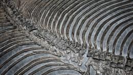 Двухметровую кость динозавра обнаружили при раскопках воФранции