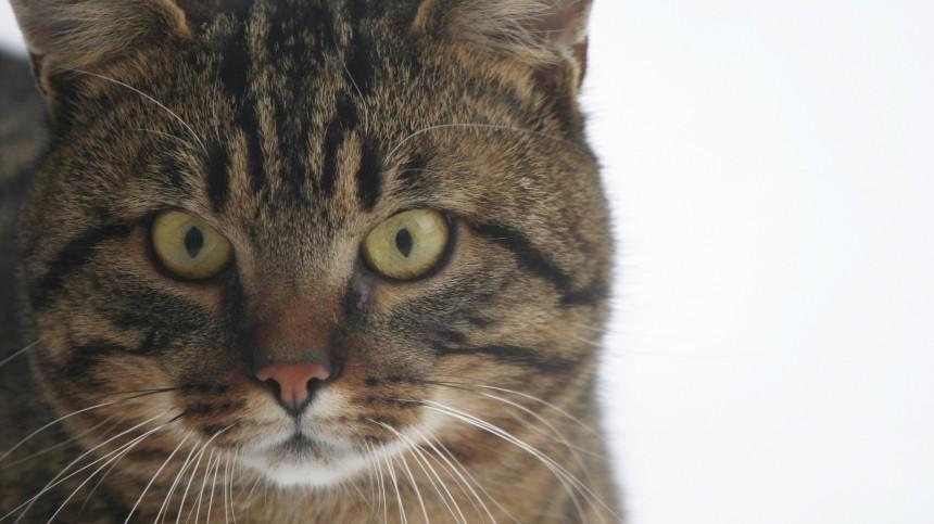 Жительница Саратова предлагает всем желающим «кота начас»