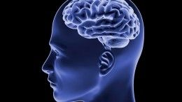Ученые рассказали, откакой работы уменьшается мозг