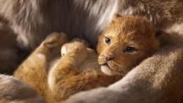 Режиссер «Короля льва» показал единственную «настоящую» сцену вфильме