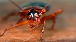 Фото: Пятисантиметровые летающие американские тараканы атаковали Сочи