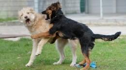 Дюжина бойцов: кто вошел всписок опасных пород собак