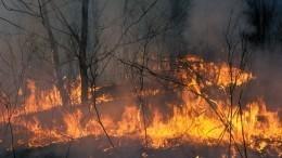 Путин распорядился подключить Минобороны ктушению пожаров вСибири