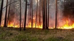 Фото: Роскосмос показал снимок пожаров вСибири изкосмоса