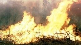 Видео: Как тушат лесные пожары вСибири