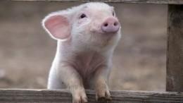 Фото: Свинья родила ануннака! Розовый монстрик взорвал сеть (18+)