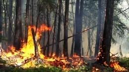 Видео: Авиация потушила крупные очаги пожаров вСибири