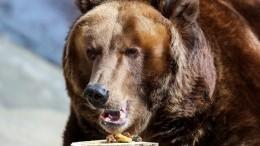 Жительница Иркутской области пришла напляж сбурым медведем— видео
