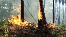 ВМЧС назвали главную причину пожаров вСибири