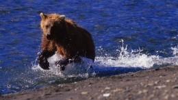 ВУрюпинске медвежонок искупался вречке рядом слюдьми— видео