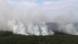 ВМинприроды рассказали омероприятиях попредотвращению лесных пожаров
