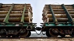 Россия может запретить экспорт леса вКитай