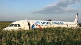 Хроника «чуда вЖуковском»: все обстоятельства посадки А-321— видео