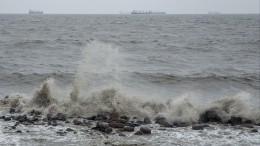 Видео: Сотни иностранных шхун укрываются оттайфуна вбухтах Приморья