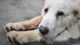 Видео: Автомобилист привязал кмашине собаку ипротащил еепоКиевскому шоссе