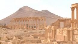 Пиотровский заявил, что Россия готова помочь Сирии воссоздать музей Пальмиры