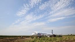 «Черные ящики» Airbus А321 зафиксировали столкновение сптицами при взлете