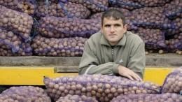 Какую картошку покупать безопаснее, мытую или грязную? —мнение эксперта