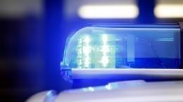 ВЛенинградской области полиция ищет потерявшуюся влесу девочку