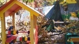 Скончался один измалышей вКраснодаре после падения дерева вдетском саду