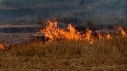 ВРостовской области борются скрупным степным пожаром