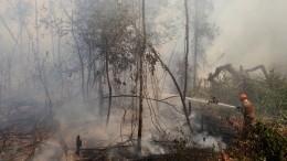 Ситуация спожарами влесах Амазонки близка ккатастрофической
