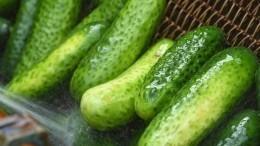 Огурцы «Нежинские»: простой рецепт эффектной закуски назиму