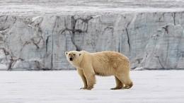 Моряки вКарском море накормили медведя исняли встречу схищником навидео