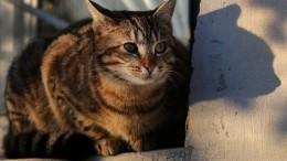 Житель Кургана рискуя жизнью пытался спасти застрявшую вокне кошку