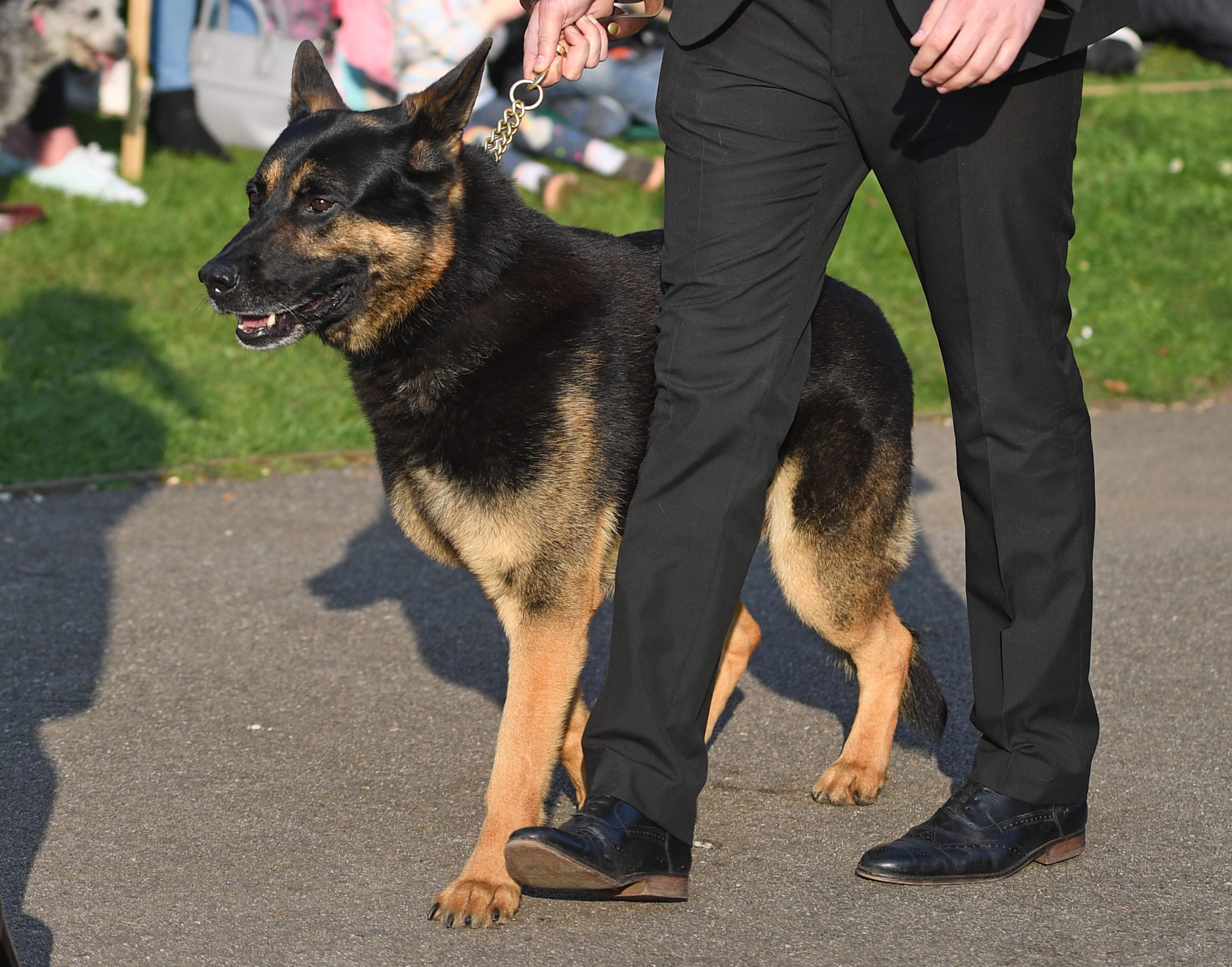 Собака Кита Флинта на его похоронах 29 марта 2019 года в городе Брейтри.