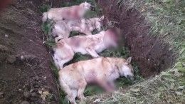 Бывшего замминистра правительства Пермского края обвиняют вотстреле породистых собак