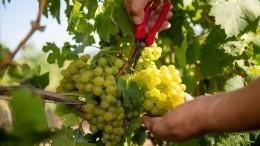 Как выбрать белое вино— советы Роскачества