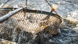 Видео: число пострадавших при нападении браконьеров изКНДР увеличилось до4