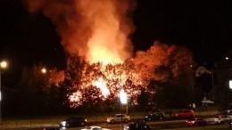 «Вулкан виден совсех сторон»: мощный пожар произошел вСосновом Бору