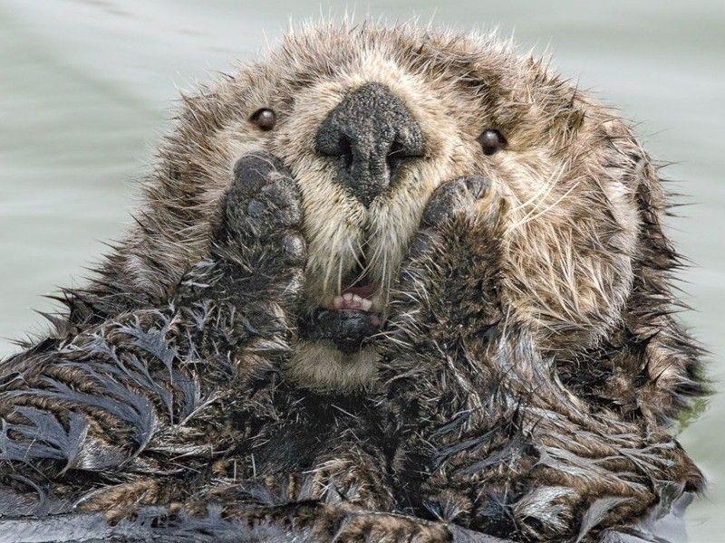 «Живот надорвешь!»— Возможно, самые смешные фото диких животных вмире