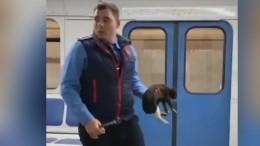 Чудеса рядом: Машинист московского метро остановил поезд, чтобы спасти котенка