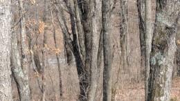 Снимок со«спрятанным» леопардом вызвал ажиотаж всети— фото