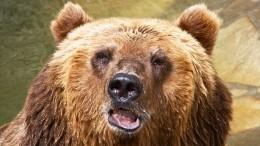 Медведь насмерть растерзал женщину вЗабайкалье