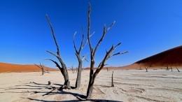 Человечеству предрекли новую глобальную катастрофу из-за нехватки фосфора