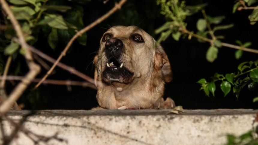 Бродячие собаки съели пенсионерку вПерми, найти удалось только кисть руки